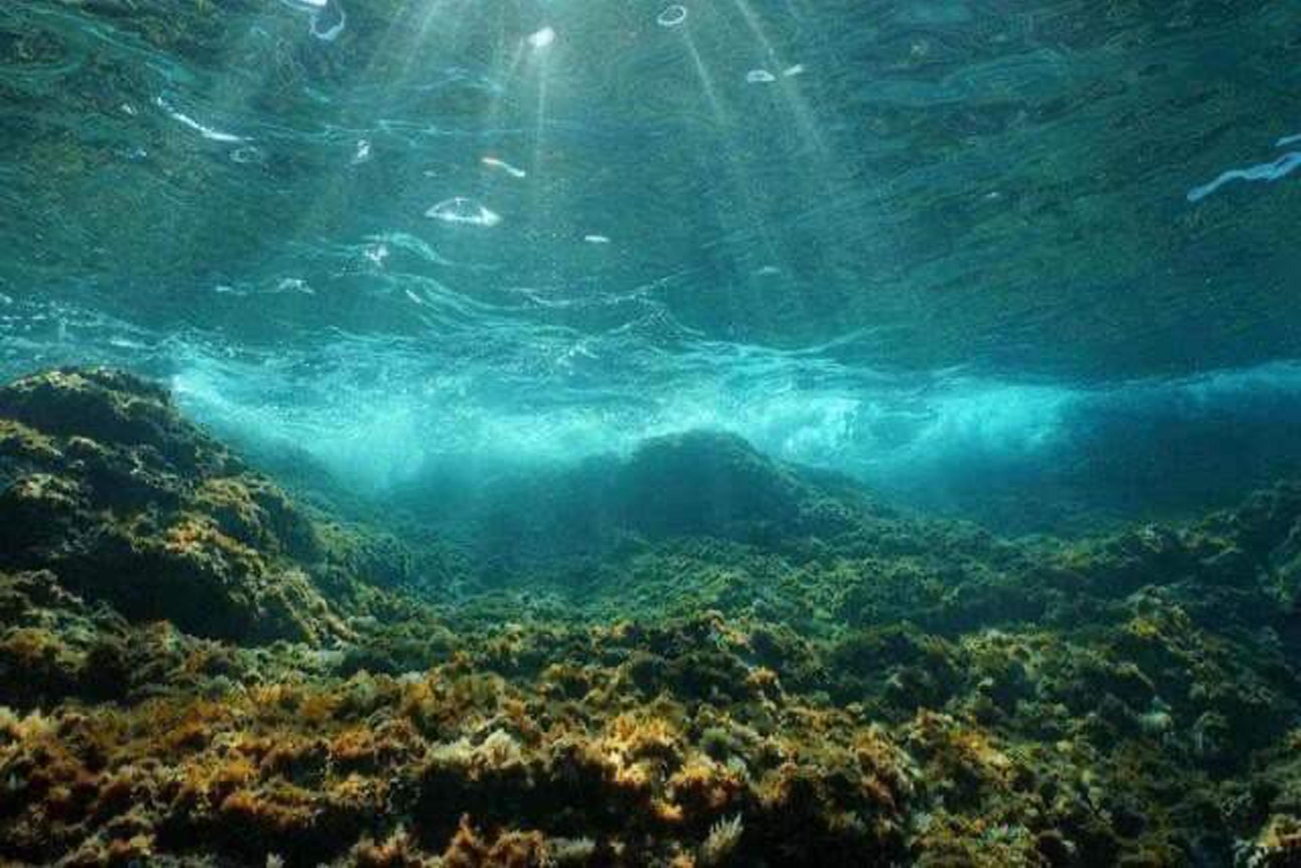 UNESCO: Chu trình hấp thụ CO2 của đại dương có thể bị đảo ngược, góp phần vào sự nóng lên toàn cầu